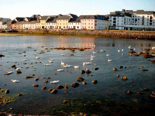 Schwanensee in Galway