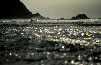 Surfer - Brandnung