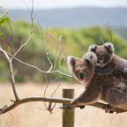 Zurück zur Bilderübersicht Australien