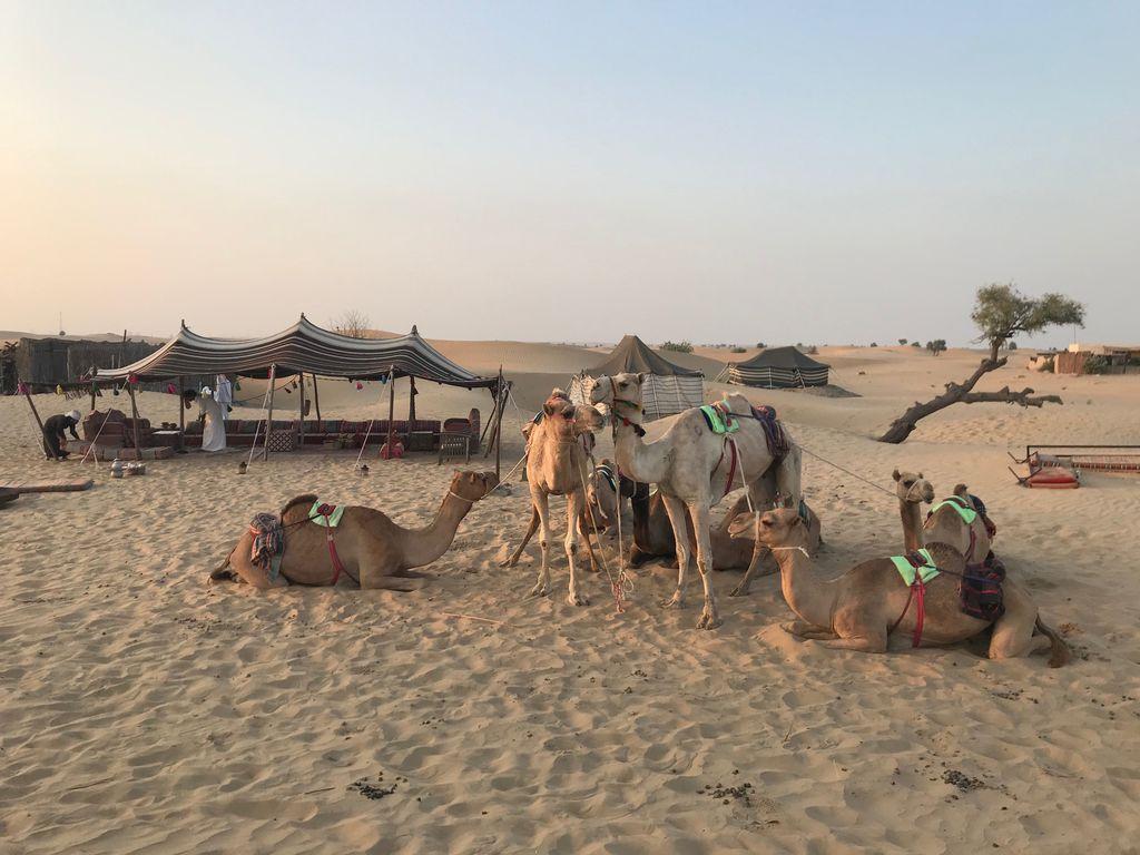 Geheimtipp Nummer 1: Beduinenerlebnis bei Kamel Uschi
