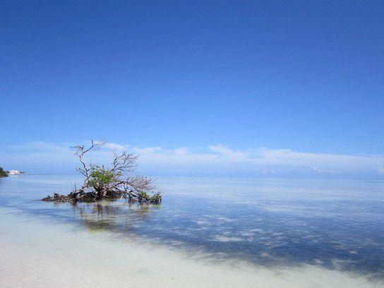 Stillleben Florida Keys