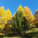 Strahlende Farben der Natur