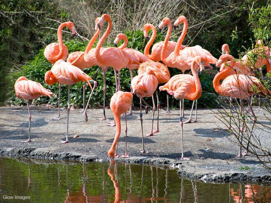 Avifauna-Vogelpark