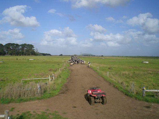Mit der Herde ziehen