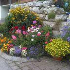 """Wahnsinnige"" Blumenvielfalt"