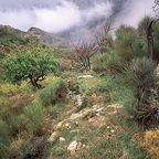 Kretas Flora