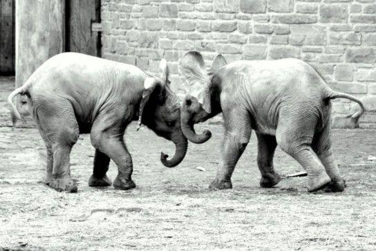 Die Babyelefanten