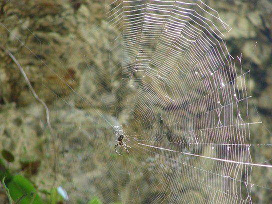Das Netz