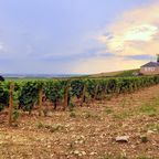 Weinlese und Trüffelsaison - Burgund lockt im November vor allem kulinarisch.