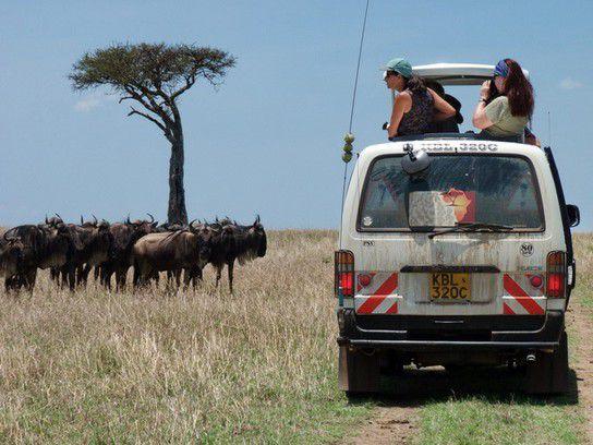 Masai Mara Gnuwanderung