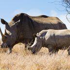 Highlights der Rundreise durch Südafrika: Hluhluwe-Park