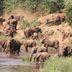 Zäune halten Tiere im Nationalpark