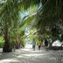 Schattiger Weg unter Palmen