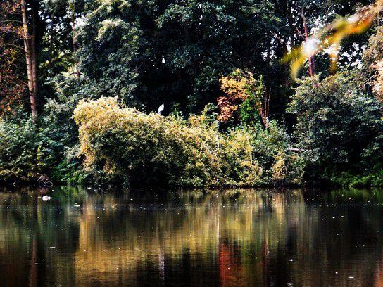 Am See im Naturschutzgebiet