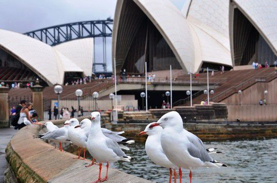 Abhängen vor der Sydney Oper