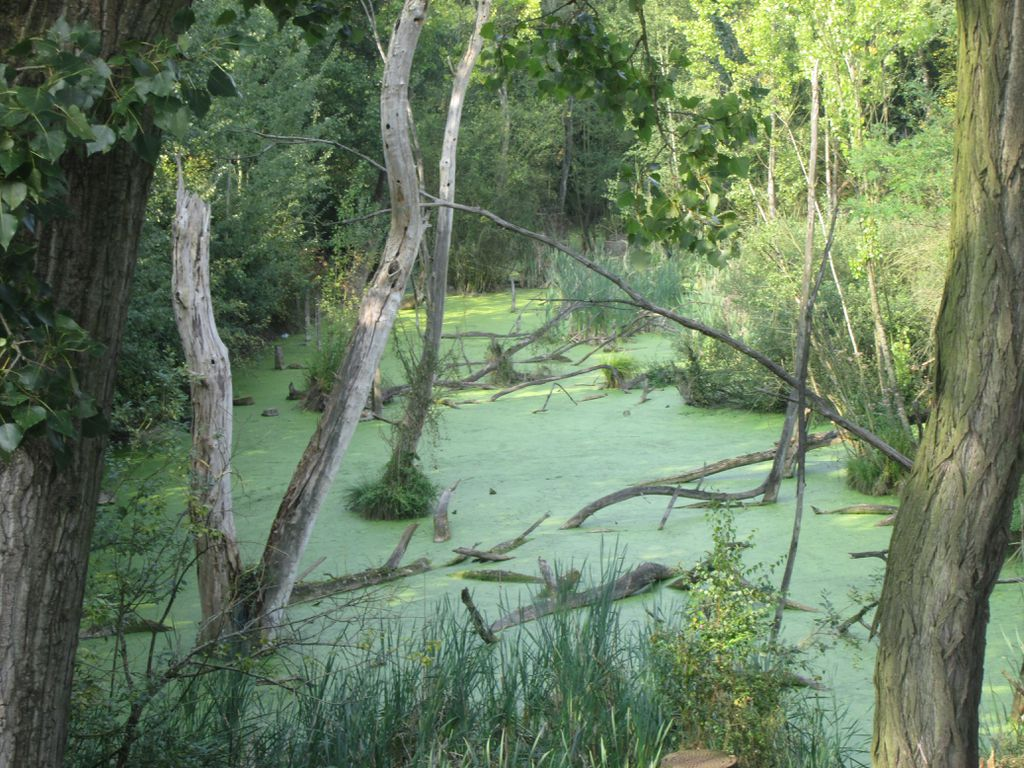 Natur pur im Landschaftspark Duisburg-Nord