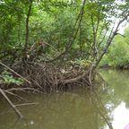 Mangrovenfahrt