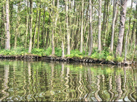 Uferwald im Peenetaal