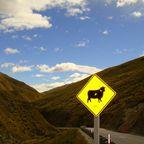 Schäfchen zählen in Neuseeland