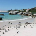 Pinguine im Paradies