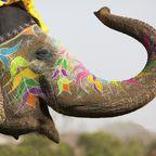 """Das """"Fest der Farben"""" dauert in Indien mehrere Tage"""