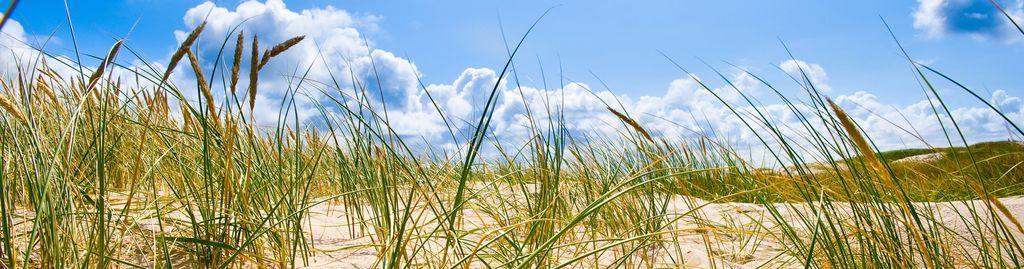Strandhafer vor blauem Sommerhimmel