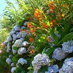 Insel der Blumen, Flores